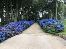 Голубая дорожка Стоковое фото RF