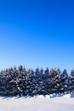 голубая зима спруса неба ландшафта Стоковая Фотография RF