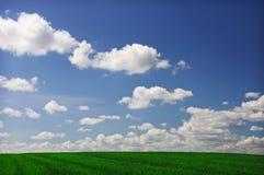 голубая золотистая пшеница неба Стоковая Фотография