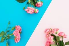 Голубая и розовая пастельная предпосылка с розами цветет Плоское положение Взгляд сверху Стоковые Изображения