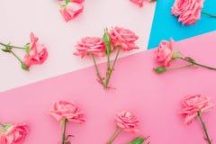 Голубая и розовая пастельная предпосылка с розами цветет Плоское положение Взгляд сверху Стоковые Фотографии RF