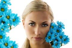 голубая маргаритка стоковые фото