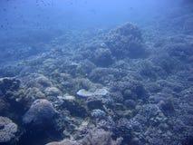 голубая окружающая среда Стоковые Фотографии RF