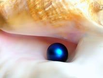 голубая перла Стоковая Фотография