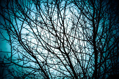 Голубая предпосылка ветви Стоковая Фотография RF
