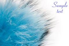 голубая пушистая шерсть стоковое изображение rf