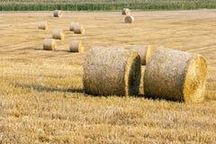 голубая пшеница неба изображения hdr золота поля Стоковое Изображение