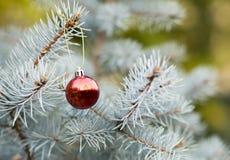 Голубая рождественская елка с красным шариком украшения стоковое изображение