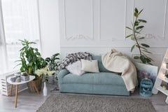 Голубая софа в комнате Немногие подушки и покрывала лежат на кресле в живущей комнате, около много растительности в баках Стоковое Изображение RF