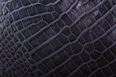 Голубая текстура кожи гада Стоковая Фотография RF