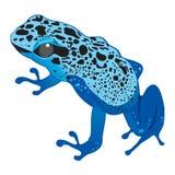 голубая темная лягушка Стоковые Изображения RF