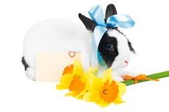 голубая тесемка кролика Стоковая Фотография RF