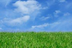 голубая трава поля над небом стоковое изображение rf