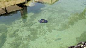 Голубая тянь в пруде Стоковое Изображение RF