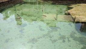 Голубая тянь и другие рыбы в гостинице праздника pond Стоковые Фотографии RF