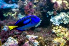 голубая тянь Стоковые Фотографии RF