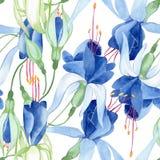 Голубая фуксия Флористический ботанический цветок Aquarelle моды Watercolour рисуя изолировал Безшовная картина предпосылки иллюстрация вектора