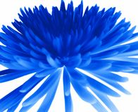 голубая хризантема Стоковые Фото