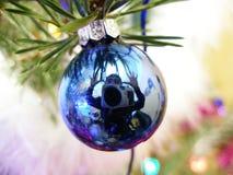 голубая цаца Стоковые Фотографии RF