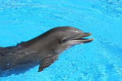 голубая ясная вода дельфина Стоковое Изображение