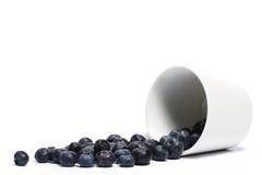 голубики придают форму чашки упали над завальцовкой Стоковые Фото