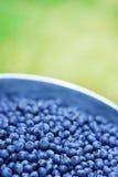 голубики свежие стоковая фотография