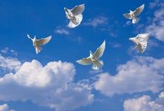 голуби белые стоковое изображение rf