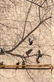Голуби взлета стоковая фотография