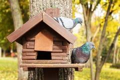 голуби в парке осени сидят на birdhouse Стоковая Фотография