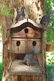 Голуби в Birdhouse Birdhouse на старом дереве в парке стоковая фотография rf
