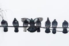 Голуби имеют приятельство также Стоковая Фотография