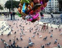 Голуби и шарики Стоковые Фото