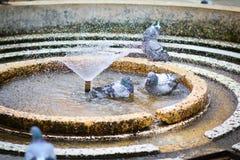 Голуби купая в круговом фонтане в победе, Виктории, квадрате Victoriei Стоковые Изображения RF