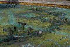 Голуби купая в фонтане Стоковые Изображения