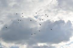 Голуби летания в небе Стоковая Фотография