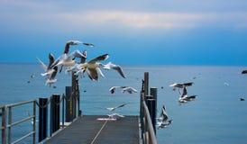 Голуби летая - озеро Leman, Лозанна стоковая фотография rf