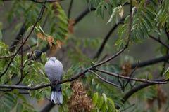 Голуби на ветви Стоковая Фотография