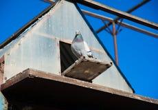 Голуби на их dovecote стоковое фото rf