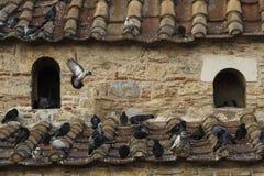 Голуби на крыше Стоковые Изображения