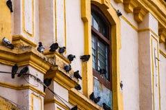 Голуби на старой стене дома Стоковое фото RF