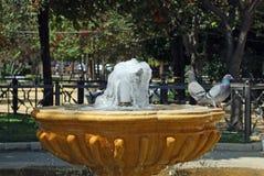 Голуби на фонтане, Кадисе Стоковые Изображения RF