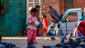 Голуби небольшого ребенк питаясь стоковое изображение rf