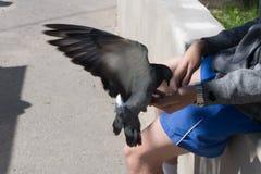 Голуби сидя на птицах потехи рук серых, стоковая фотография rf