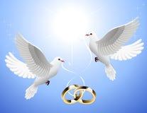 голуби держа кольца wedding белизна Стоковая Фотография RF