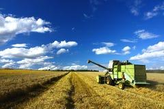 голубое время неба machin хлебоуборки зернокомбайна Стоковое Фото