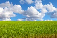 голубое камышовое небо вниз Стоковое Изображение RF