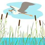 голубое летание цапли, иллюстрация вектора, плоский стиль бесплатная иллюстрация