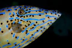 голубое море рыб Стоковые Фотографии RF