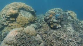 Голубое морское дно с коралловыми рифами и водолазом акваланга акции видеоматериалы