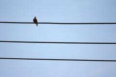 голубое небо вихруна удерживания кабеля Стоковые Фотографии RF
